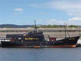 Австралийцы встретили японских китобоев водяными пушками