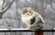 Зима близко: Завтра в Беларуси – мокрый снег
