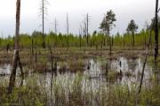 Горят Ольманские болота, возможно, из-за непотушенной сигареты грибника