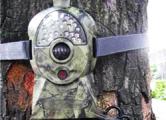 В лесах установят видеокамеры