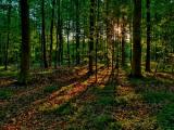 Беларусь в полной мере решает задачи по воспроизводству леса - Иванов