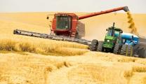 Нынешний урожай зерна в Беларуси на 1 млн.т превышает прошлогодний