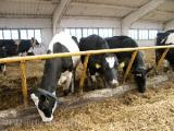 Селекционно-племенная молочная ферма появится до конца года в Смолевичском районе
