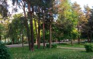 В Минске вырубают деревья, чтобы не закрыть «президентскую» дорогу