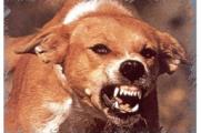 Количество случаев бешенства среди животных в Беларуси увеличилось более чем на 80%