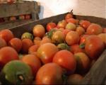 Производство тепличных овощей в Беларуси в январе-августе возросло на 4,5% до 83,5 тыс.т