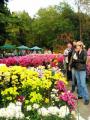 Выставка хризантем и георгин пройдет в Центральном ботаническом саду 24 сентября