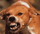 Заболеваемость бешенством среди домашних животных в Беларуси с начала года выросла в 2 раза
