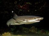 В Египте акула смертельно ранила туристку из Германии