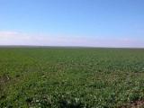 В Беларуси усовершенствовали использование земель
