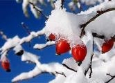 Толщина снежного покрова в Гродно — 8 сантиметров
