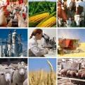 Система господдержки АПК в Беларуси будет изменена с учетом мировой практики