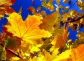 Осенний неадекват