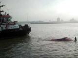 В порту Антверпена нашли труп 12-метрового кита