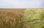 Несмотря на кризис, президент по-прежнему субсидирует сельхозпроизводителей