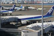 Собака задержала 14 рейсов в токийском аэропорту Ханэда