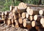 Предприятия деревообработки увеличили объемы производства на 70 процентов благодаря Банку развития