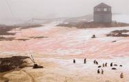В Антарктиде снег стал розовым
