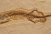 Обнаружена древнейшая змея с четырьмя конечностями