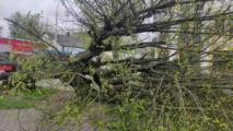 Последствия сильного ветра 3 мая: нарушенное электроснабжение, поврежденные машины и крыши