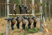 Минлесхоз создал каталог охотничьих хозяйств Беларуси