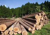 Беларусь продлила лицензирование экспорта отдельных лесоматериалов