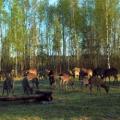 Минлесхоз и Минспорта будут проводить конкурс на лучшее охотничье хозяйство
