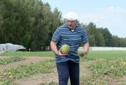 Уборка бахчевых в Беларуси