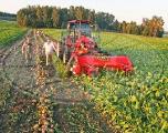 Сельхозорганизации Беларуси завершили уборку сахарной свеклы