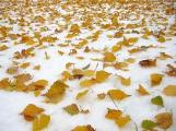Прогноз погоды на 18 ноября