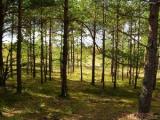Минлесхоз обеспокоен состоянием мини-полигонов бытовых отходов вблизи лесных массивов