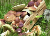 Пенсионер из Польши увлекся сбором грибов и попал в Беларусь