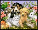 В Беларуси планируется запретить содержание животных в подвалах и на чердаках многоквартирных домов