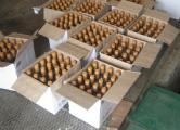 На складе в Минске нашли семь тысяч бутылок нелегального коньяка