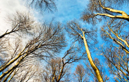 Погода в Беларуси: оранжевый уровень опасности, а потом до +24