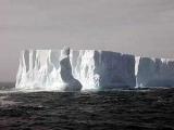 Айсберги у берегов Новой Зеландии превратили в достопримечательность