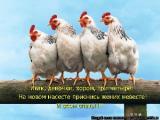 Предельные максимальные цены на мясо цыплят-бройлеров установлены в Беларуси с 1 января