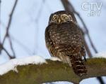 Белорусские орнитологи приступили к зимнему учету птиц