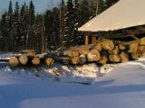 Организации Минлесхоза Беларуси в 2011 году перевыполнили план по заготовке ликвидной древесины на 8%