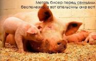 В Беларуси усиливаются меры по недопущению заноса африканской чумы свиней
