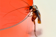 Воля коллектива для тараканов оказалась важнее личных пристрастий