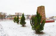 В Орше в январе продолжают высаживать деревья и кустарники