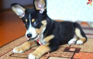 Волонтер: Перед годом Собаки многие белорусы хотели забрать щенка и подарить как сувенир