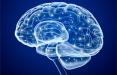 Медики назвали простой способ повысить умственные способности и работоспособность