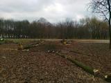 В минском парке 40-летия Октября снова рубят деревья