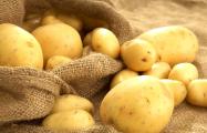 Белорусы останутся без картошки и льна?