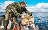Фотофакт: в Минское море выпустили 4 тонны щуки