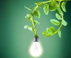 В Голландии улицы освещают электричеством из растений