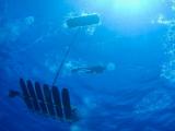 Роботы-пловцы преодолели рекордное расстояние
