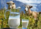 Цены на молоко могут резко вырасти